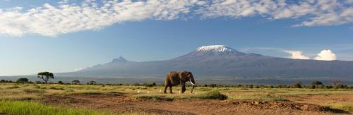 Savane elephant