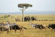 Savane troupeaux